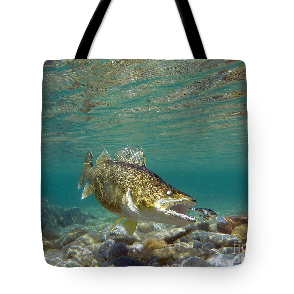 Fish Art Tote Bag featuring the painting Walleye and Rapala lure by Paul Buggia