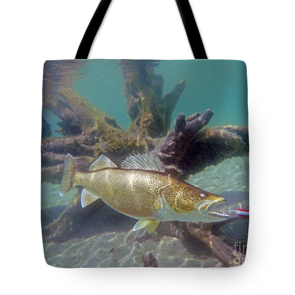 Fish Prints Tote Bag featuring the painting Walleye Pike And Dardevle by Paul Buggia