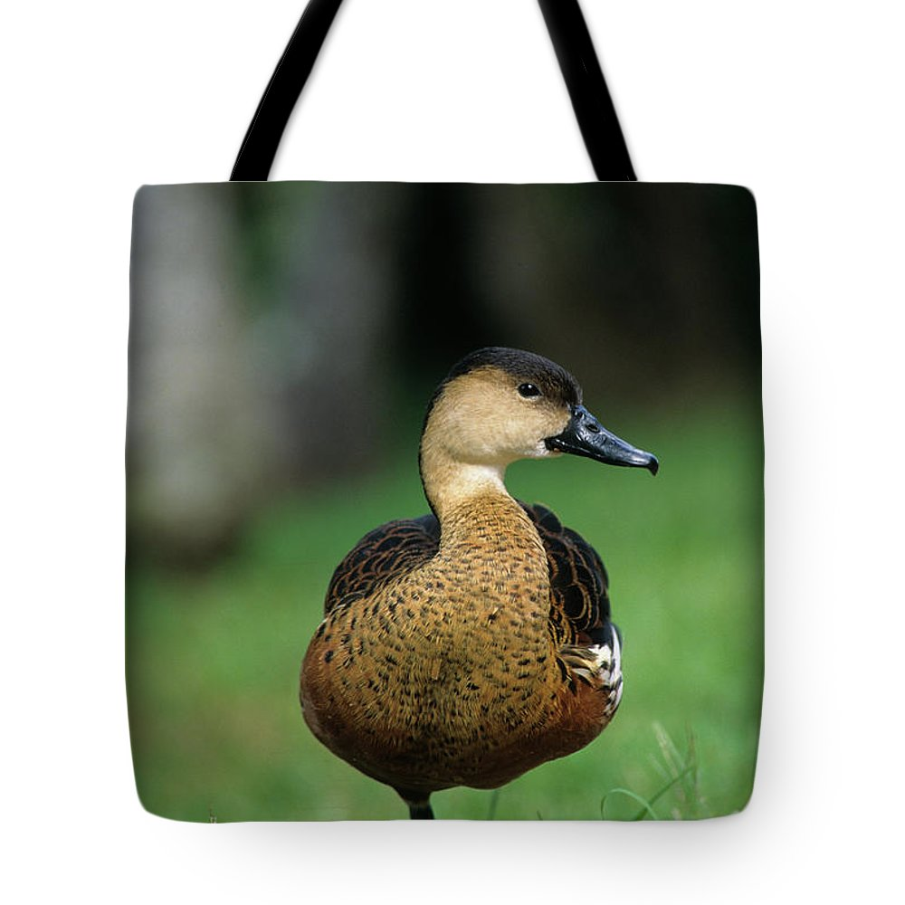 Flpa Tote Bag featuring the photograph Wandering Whistling Duck by Martin Withers