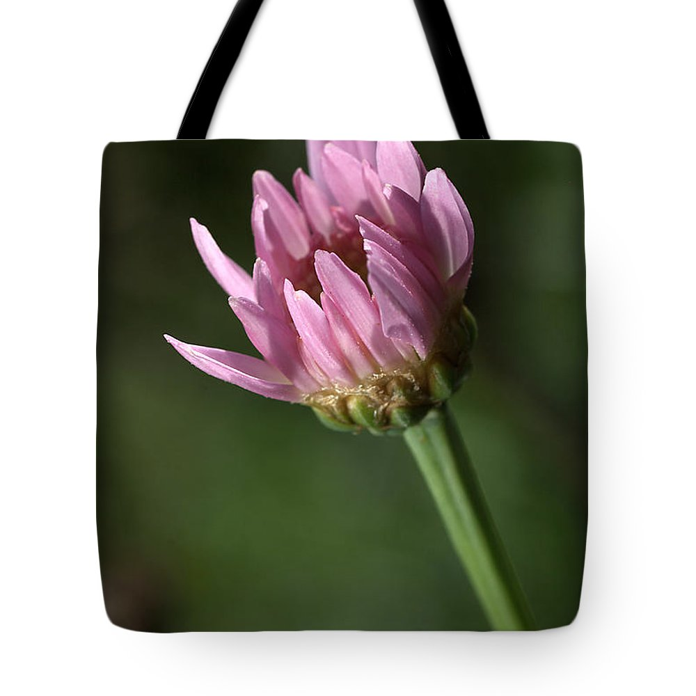 Federation Daisy Tote Bag featuring the photograph Warming In The Sun by Joy Watson