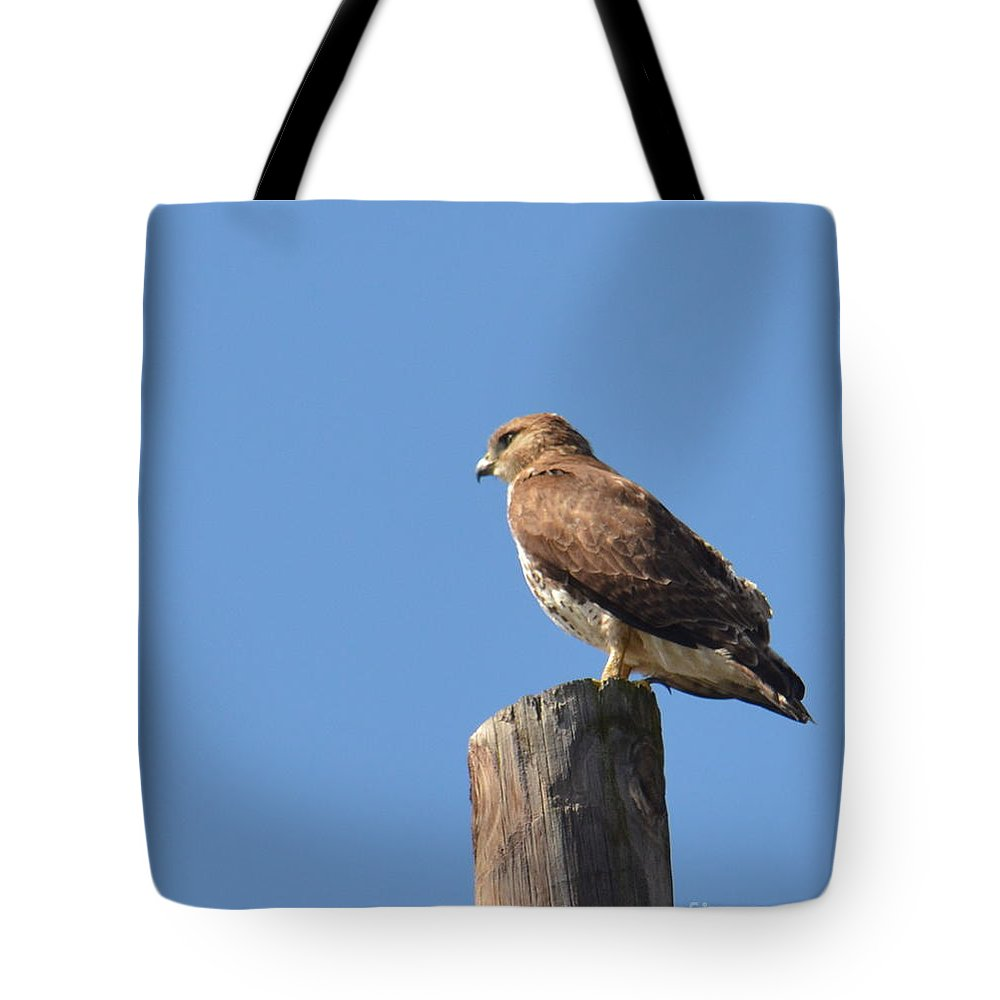 Watchtower-hawk Tote Bag featuring the photograph Watchtower-hawk by Maria Urso