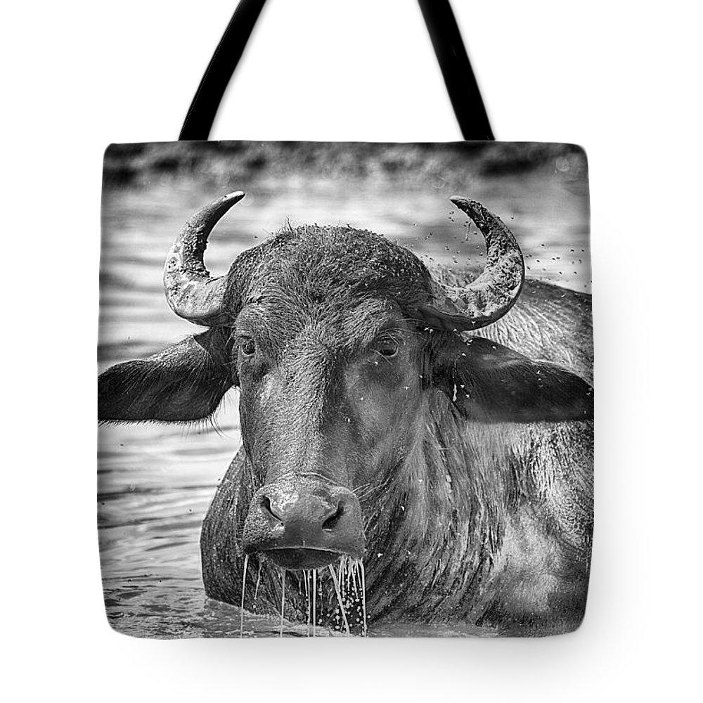 Water Buffalo Tote Bag featuring the photograph Water Buffalo-black And White by Douglas Barnard