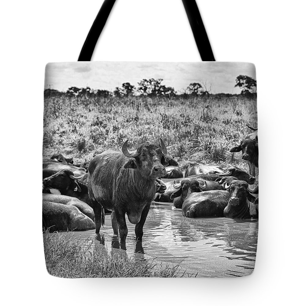 Water Buffalo Tote Bag featuring the photograph Water Buffaloes-black And White by Douglas Barnard