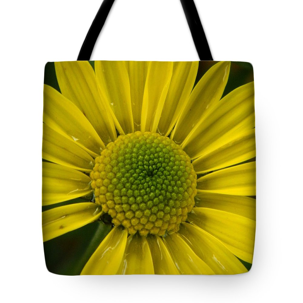 Water Tote Bag featuring the photograph Water Kissed Yellow Chrysanthemum by Nicki Bennett
