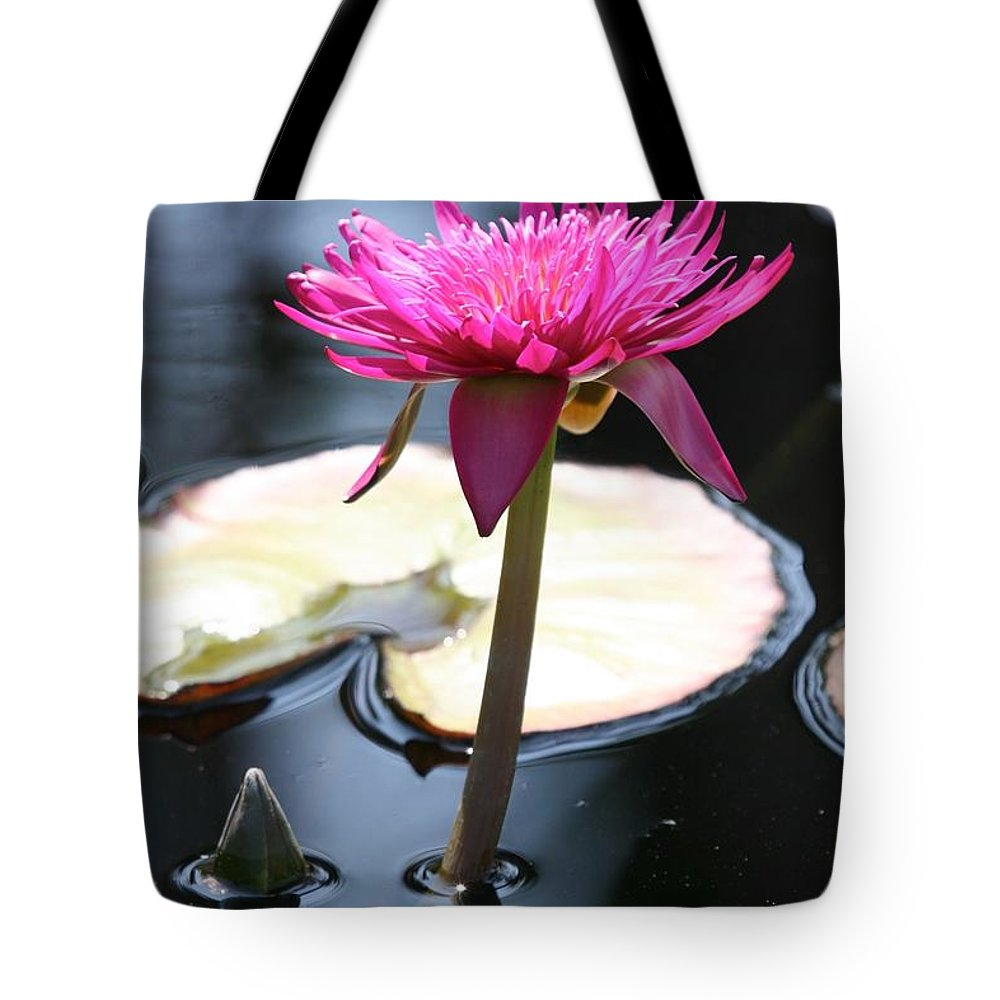 Waterlily Tote Bag featuring the photograph Pink Water Lily by Ian Mcadie