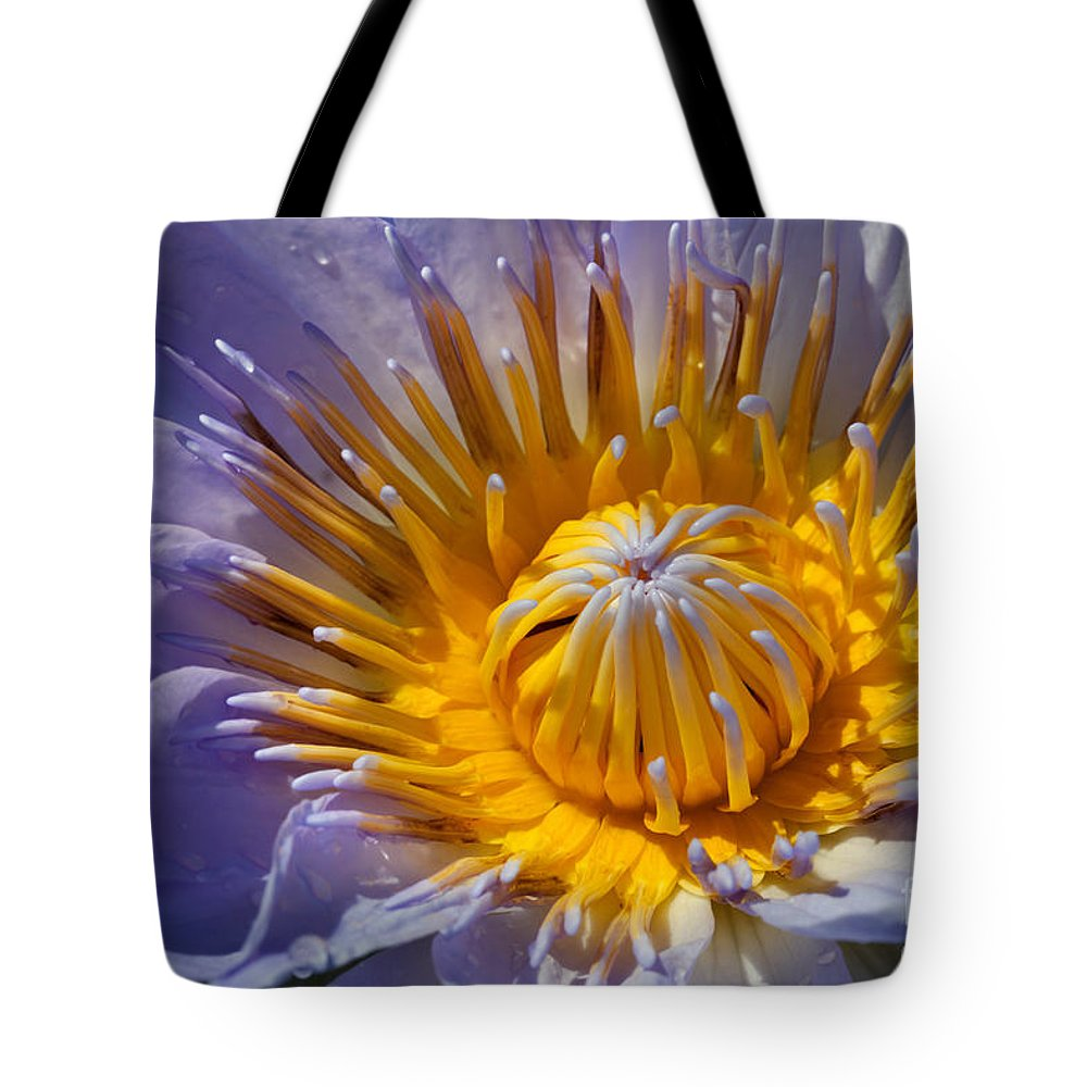 Earth Day Tote Bag featuring the photograph Water Lily by Anthony Totah
