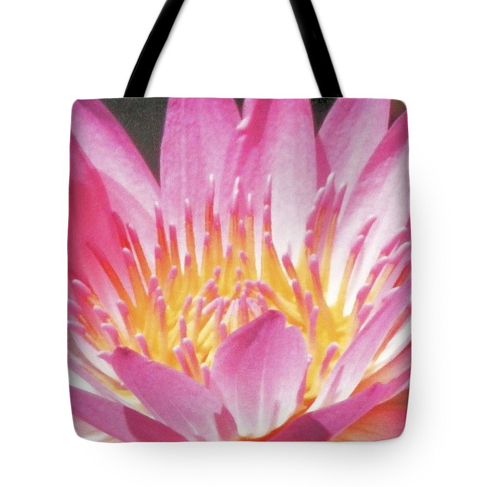What Awesome Tote Bag featuring the photograph Pink Water Lily Beauty by Belinda Lee
