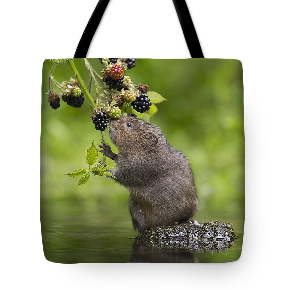 Nis Tote Bag featuring the photograph Water Vole Eating Blackberries Kent Uk by Penny Dixie
