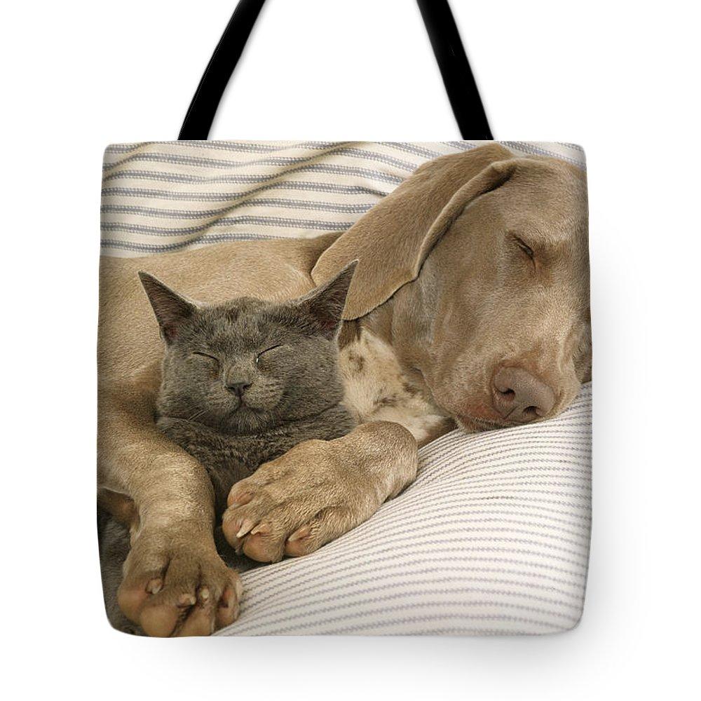 Weimaraner Tote Bag featuring the photograph Weimaraner Asleep With Cat by John Daniels