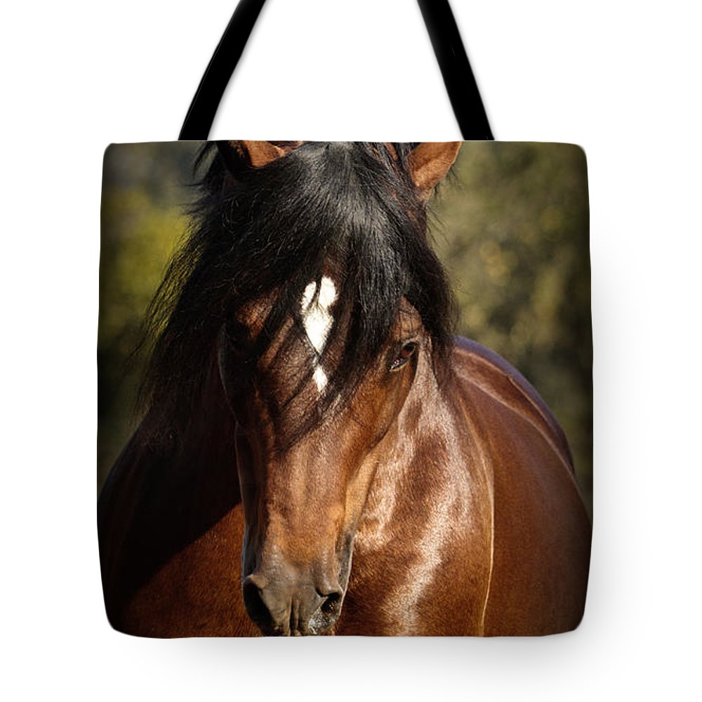 Welsh Cob Stallion Tote Bag featuring the photograph Welsh Cob Stallion by Wes and Dotty Weber