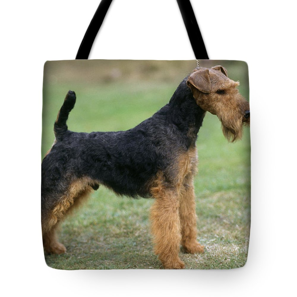 Welsh Terrier Tote Bag featuring the photograph Welsh Terrier Dog by John Daniels