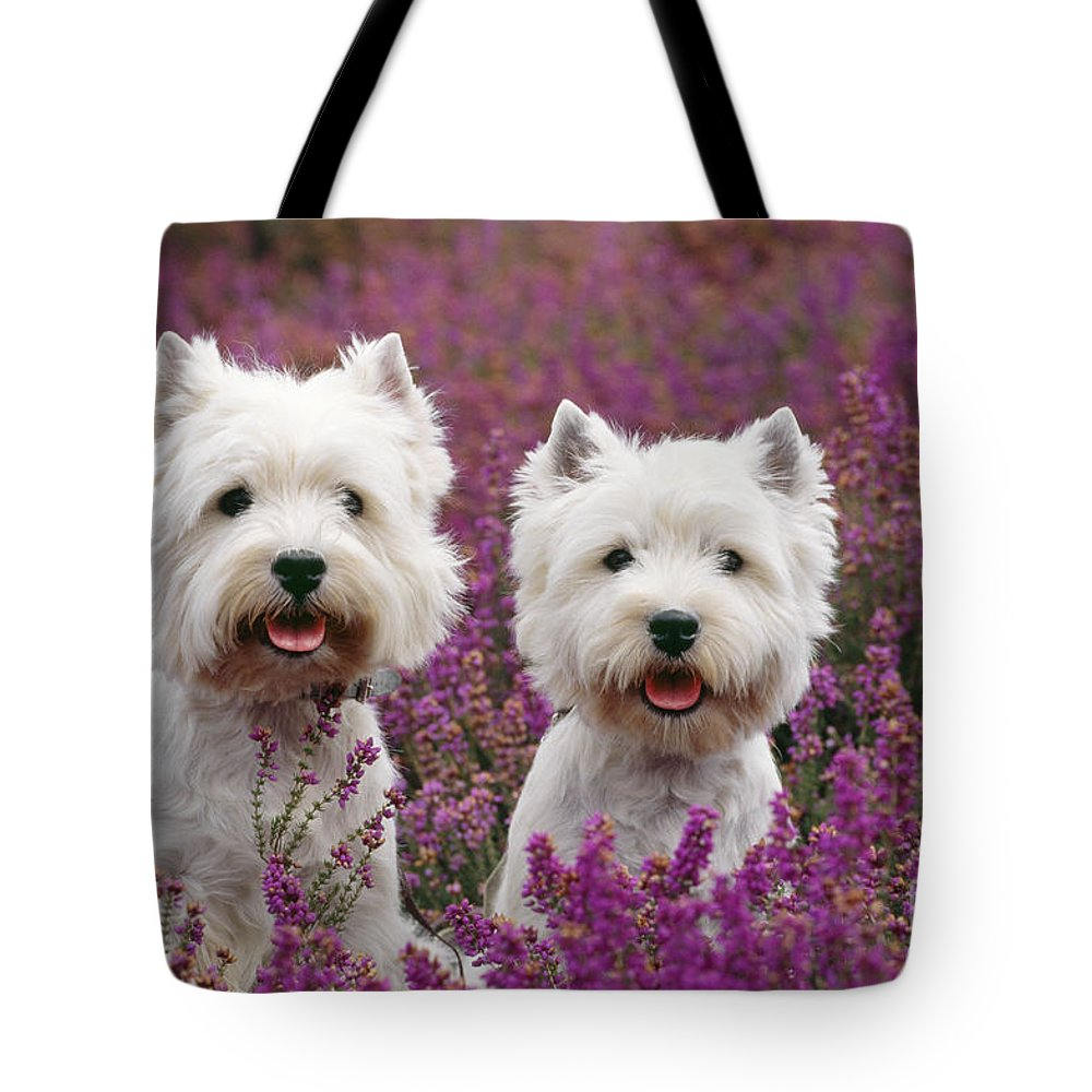 West Highland Terrier Tote Bag featuring the photograph West Highland Terrier Dogs In Heather by John Daniels