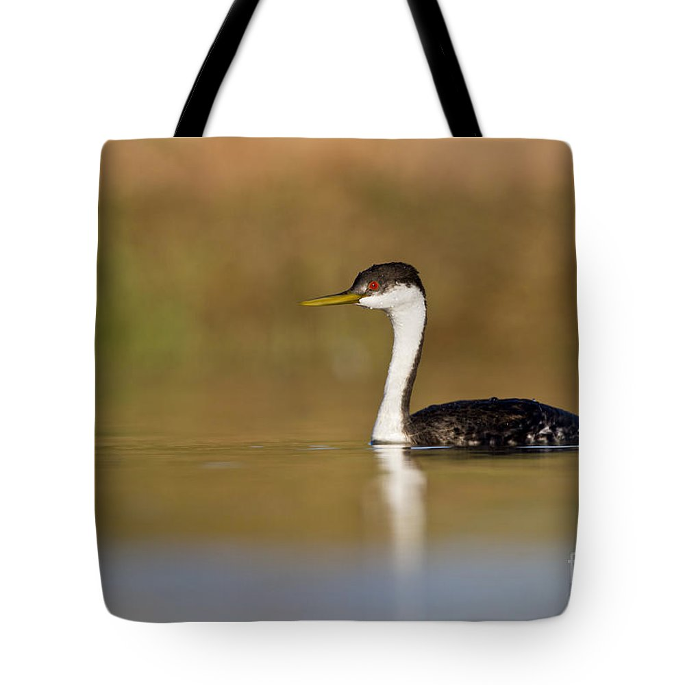 Western Grebe Tote Bag featuring the photograph Western Grebe On Still Water by Bryan Keil