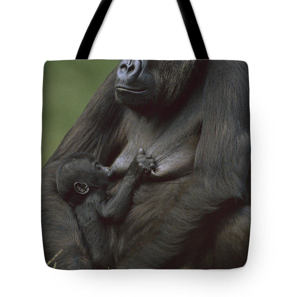Africa Tote Bag featuring the photograph Western Lowland Gorilla Nursing Infant by Konrad Wothe