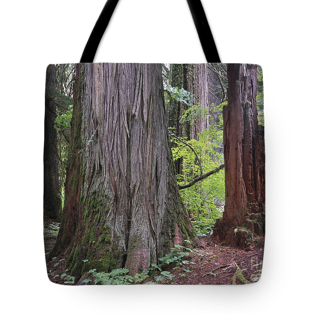 00173588 Tote Bag featuring the photograph Western Red Cedar Grove by Tim Fitzharris