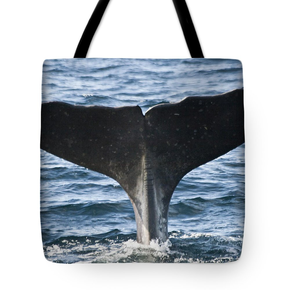 Whale Tote Bag featuring the photograph Whale Diving by Heiko Koehrer-Wagner