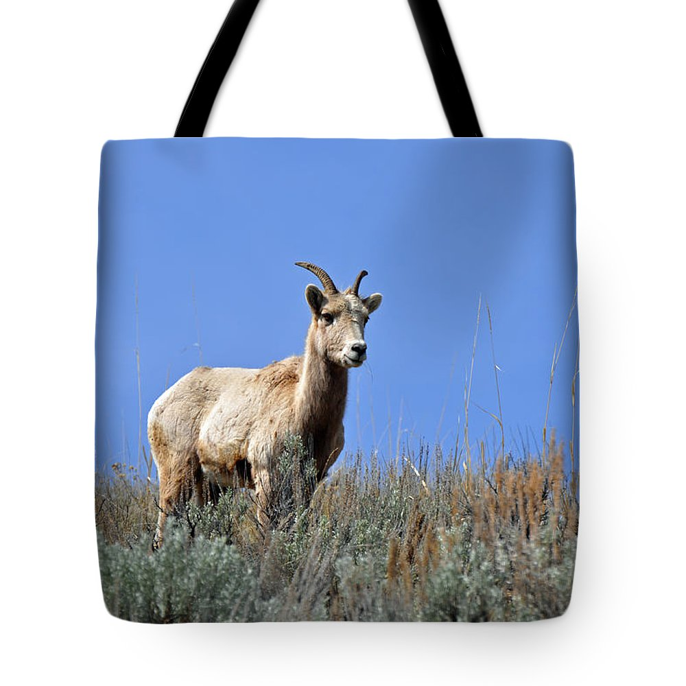 Yellowstone Tote Bag featuring the photograph What Are Ewe You Looking At? by Bruce Gourley
