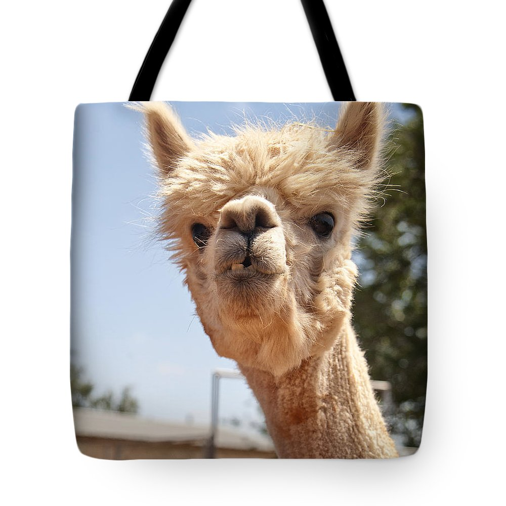 Alpaca Tote Bag featuring the photograph What Are You Lookin' At by Melany Sarafis