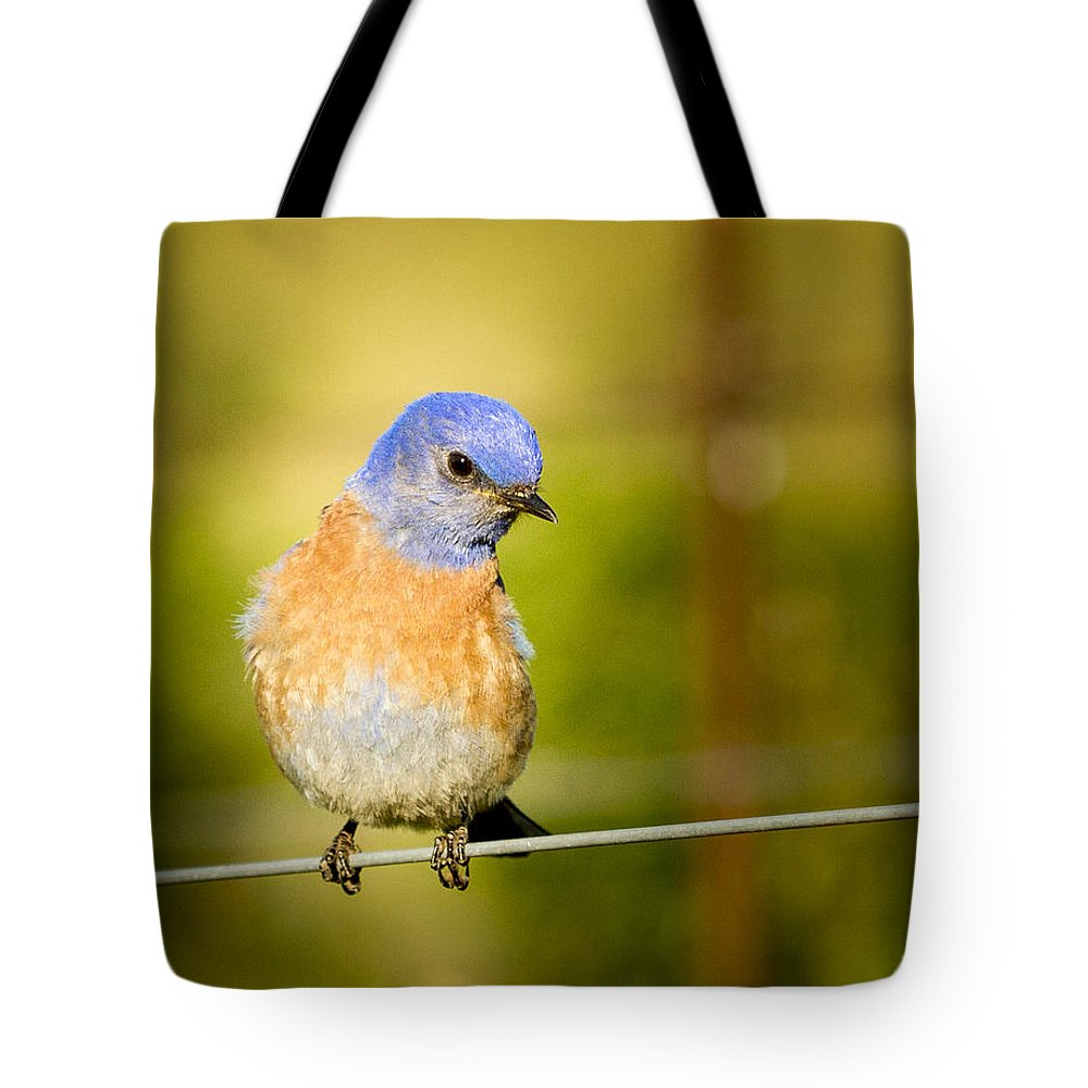 Bird Tote Bag featuring the photograph Bird On A Wire by Jean Noren