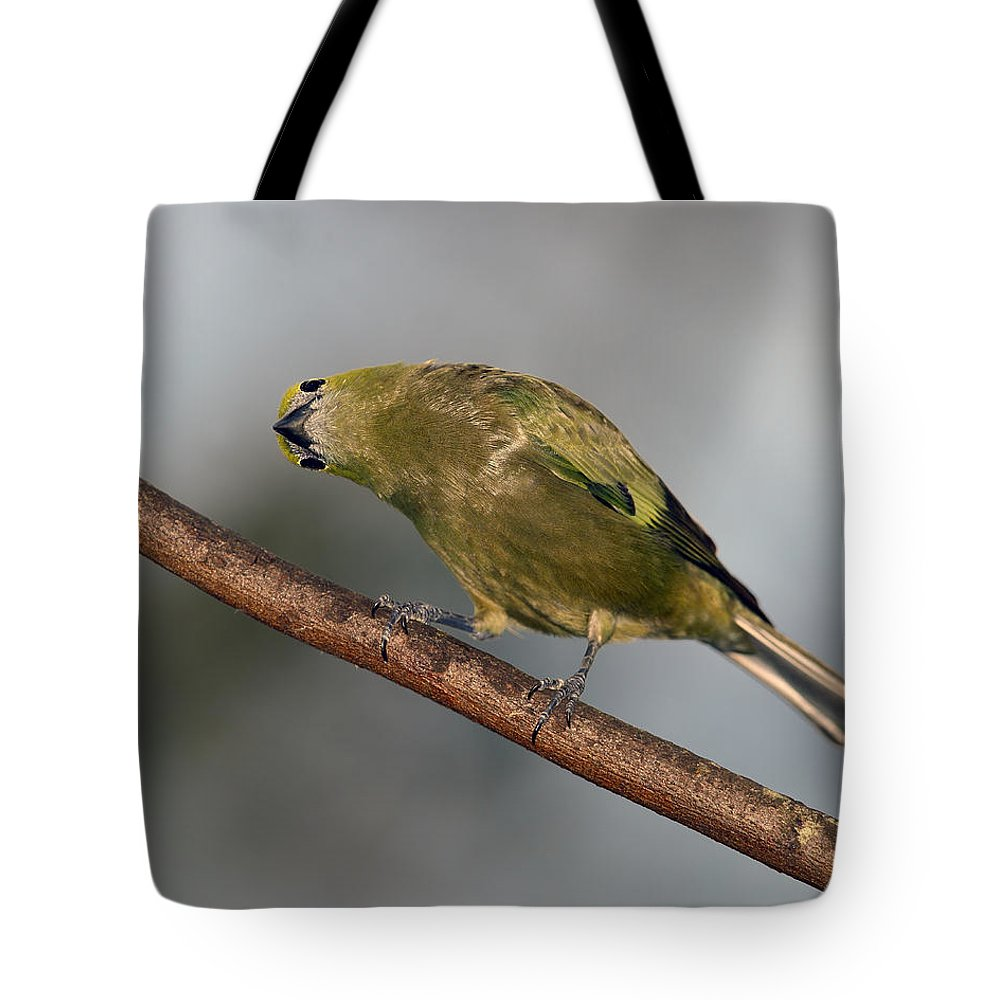 Palm Tanager Tote Bag featuring the photograph What's Up And Down by Tony Beck