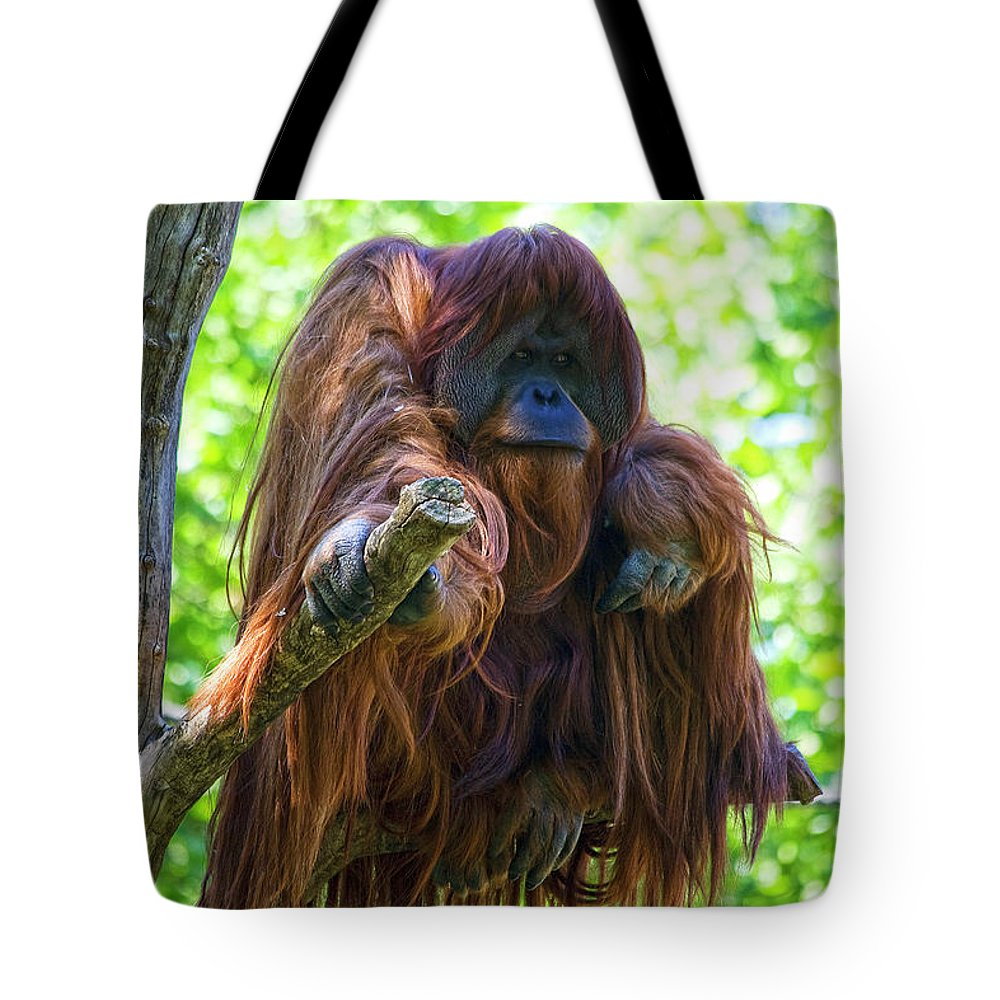 Orang Untang Tote Bag featuring the photograph What's Up by Heiko Koehrer-Wagner