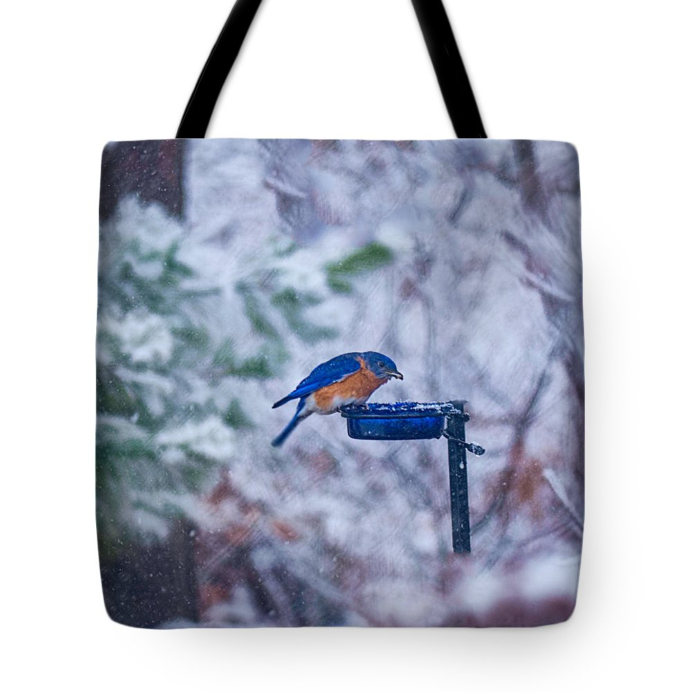 Bluebird Tote Bag featuring the photograph Where Did Spring Go by David Kay