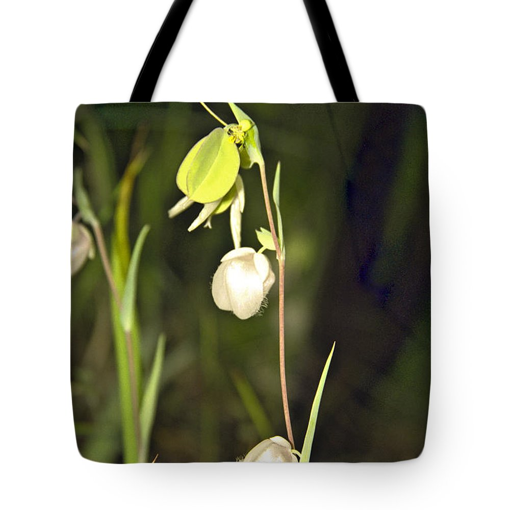 Wildflowers; Globes; Nature; Green; White Tote Bag featuring the photograph Whispers by Kathy McClure