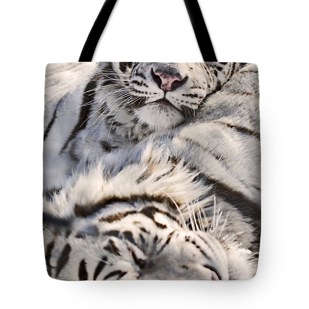 Light Tote Bag featuring the photograph White Bengal Tigers, Forestry Farm by Chad Coombs