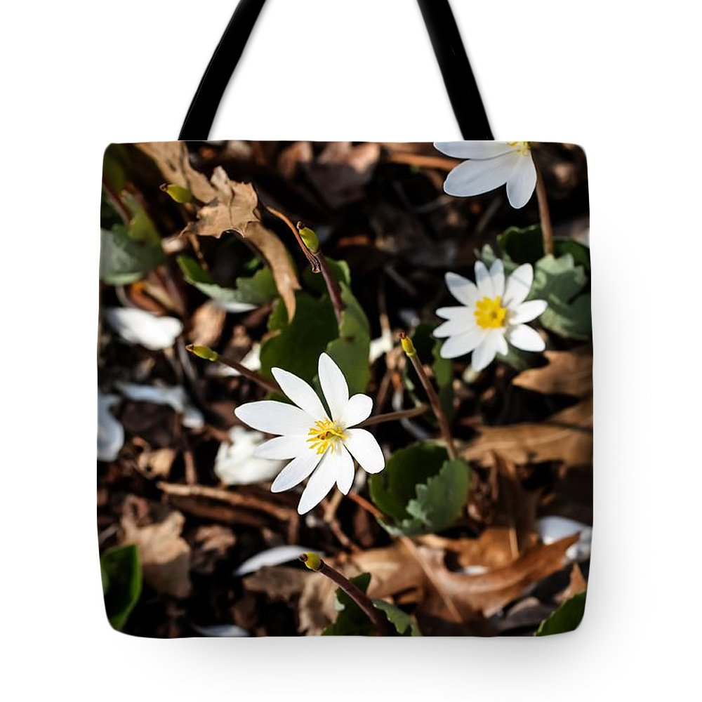 White Bloodroot Tote Bag featuring the photograph White Bloodroot by Cynthia Woods