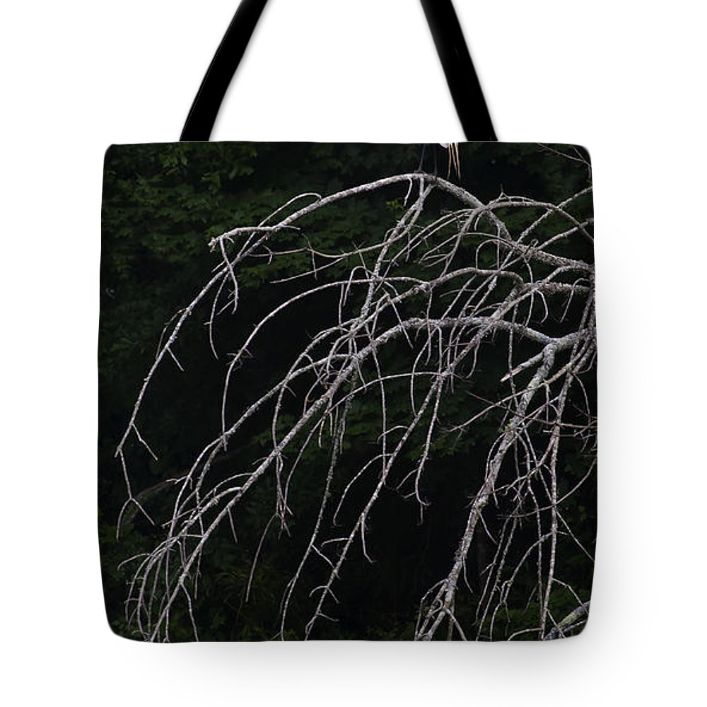 Bird Tote Bag featuring the photograph White Egret  #9120 by J L Woody Wooden