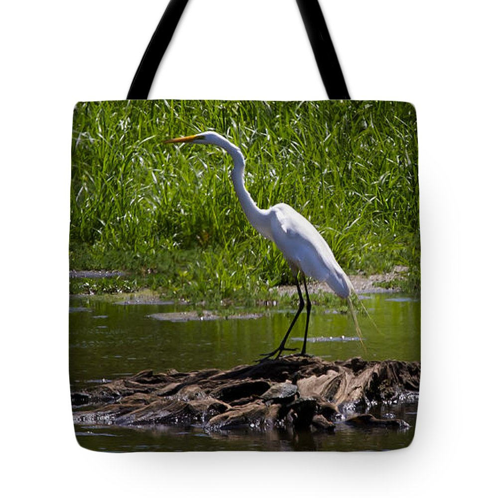 Bird Tote Bag featuring the photograph White Egret And Snapping Turtles by J L Woody Wooden