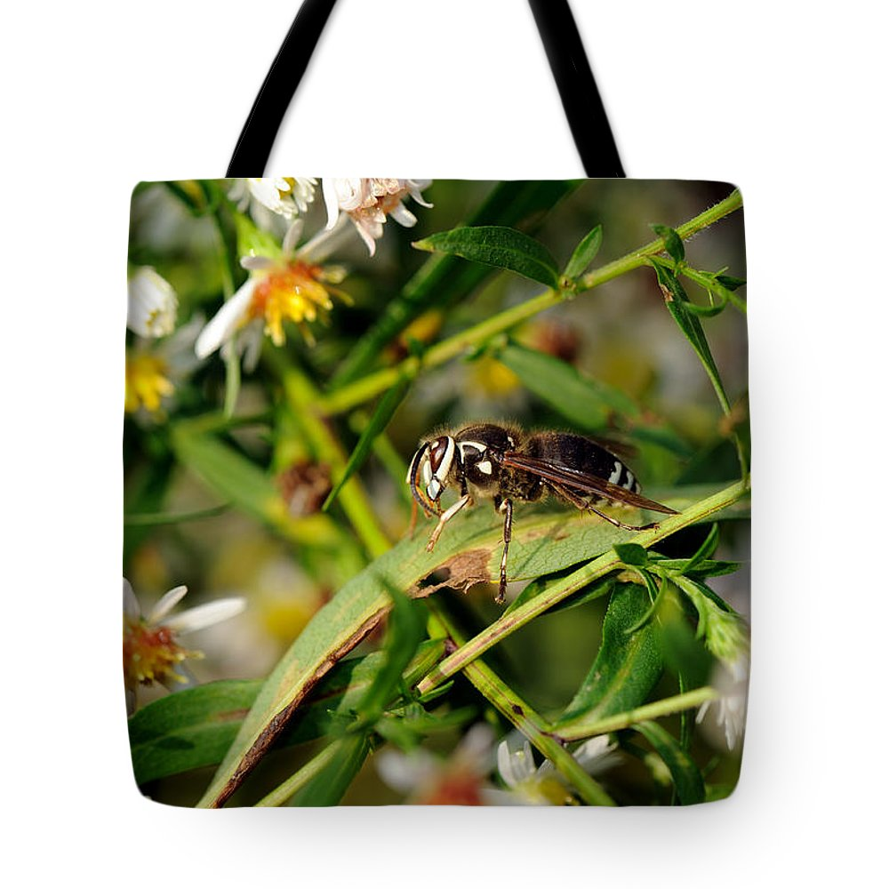 Bald-faced Hornet Tote Bag featuring the photograph White Face by Ian Ashbaugh