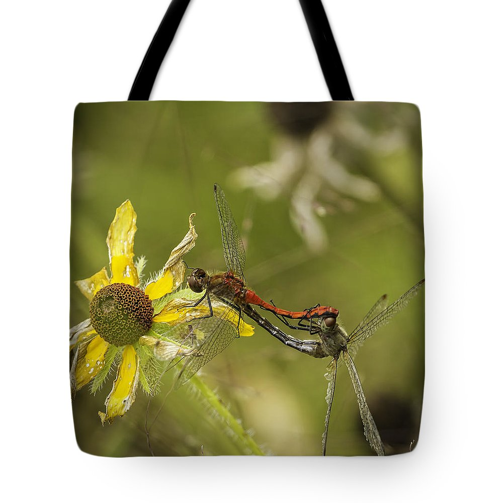 White-faced Meadow Hawks Mating Tote Bag featuring the photograph White-faced Meadowhawks Mating by Thomas Young