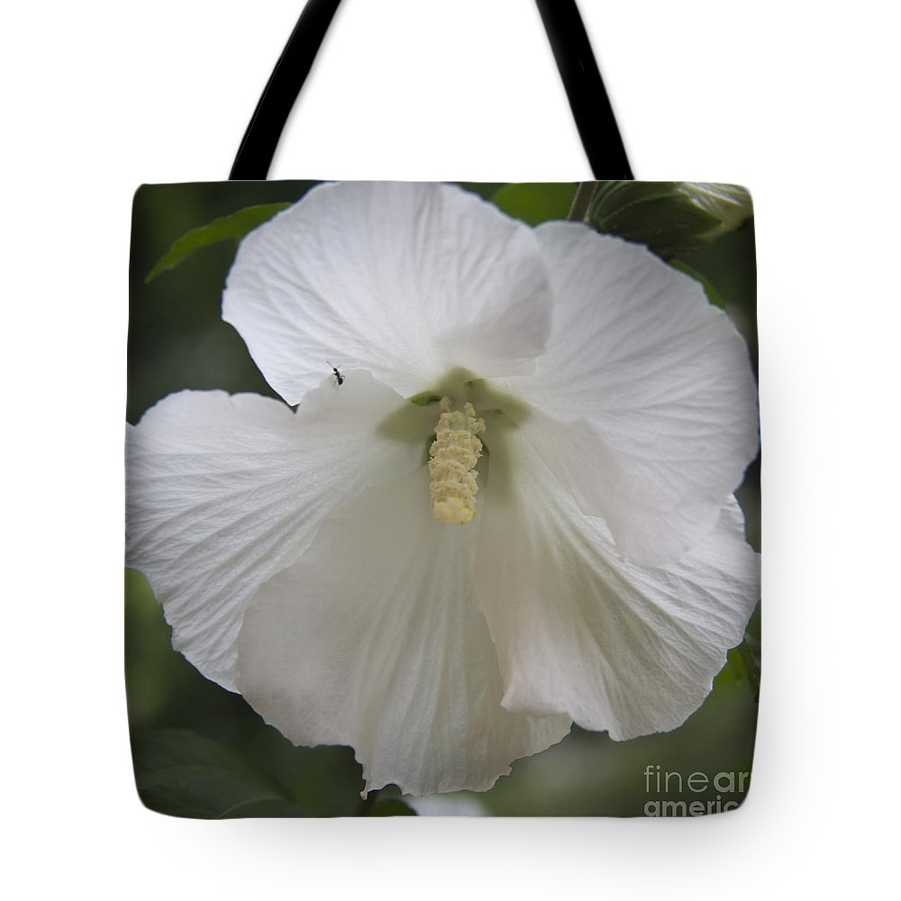 Rose Of Sharon Tote Bag featuring the photograph White Hibiscus Squared by Teresa Mucha