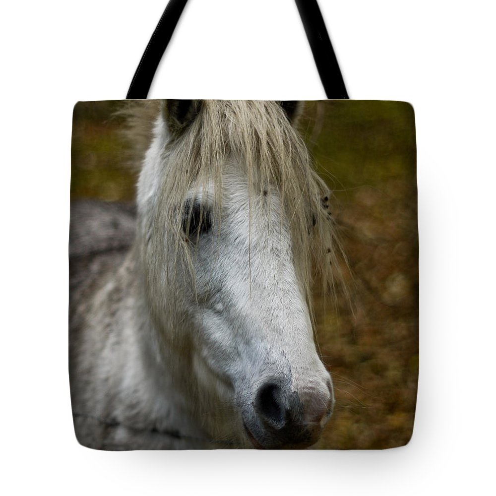 Horse Tote Bag featuring the photograph White Pony by Brothers Beerens