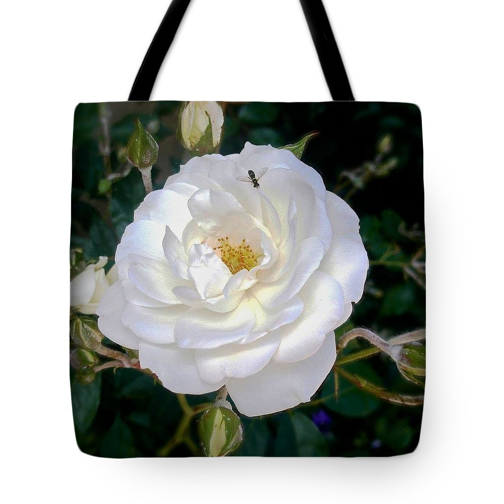 White Rose Print Tote Bag featuring the photograph Bernardus' White Rose Bush by Kristina Deane