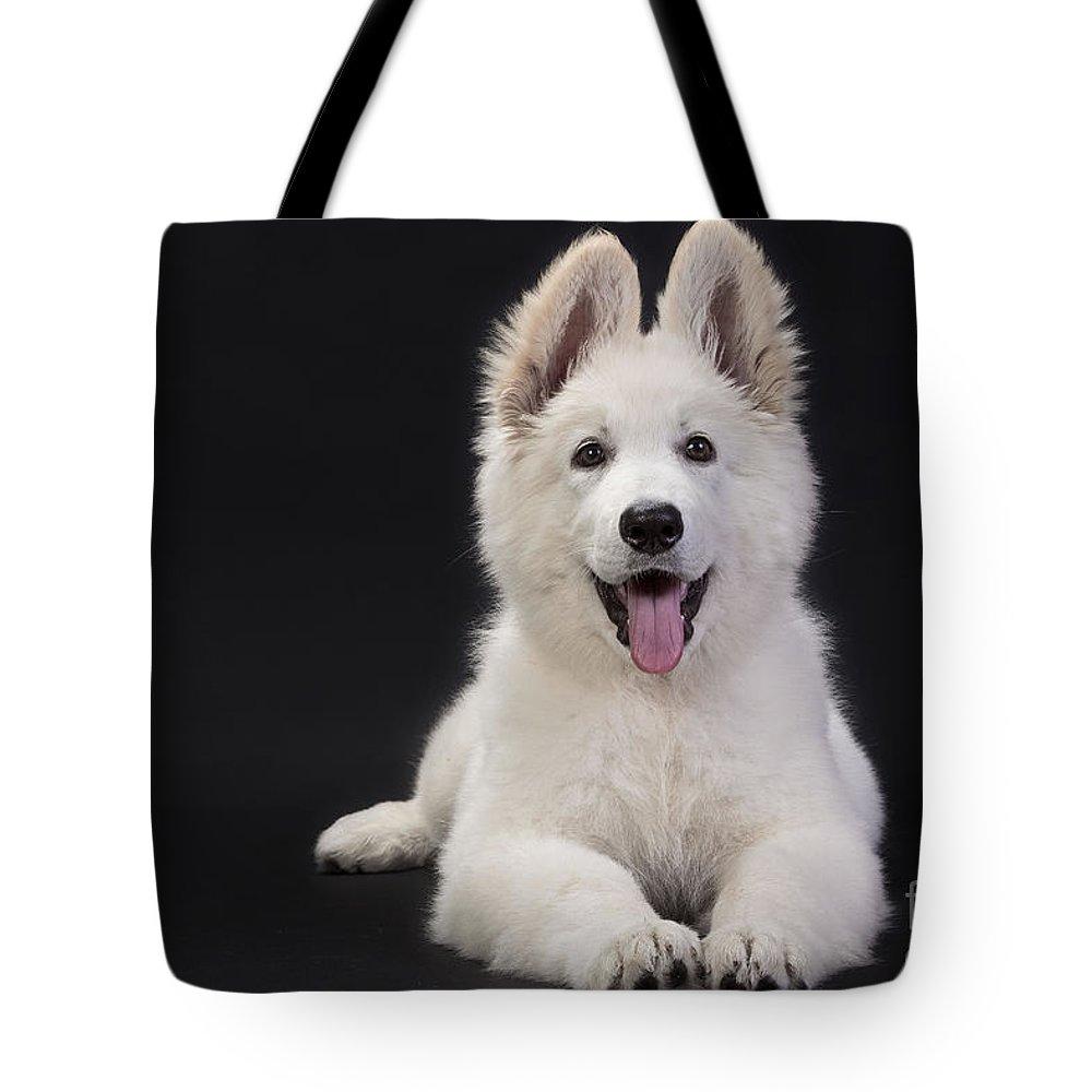 White Swiss Shepherd Tote Bag featuring the photograph White Swiss Shepherd Dog by Jean-Michel Labat