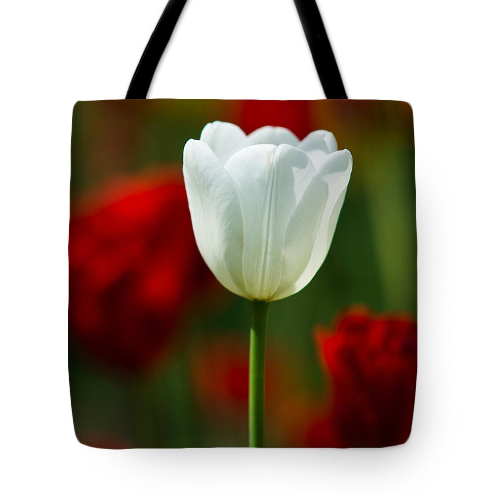 Flower Tote Bag featuring the photograph White Tulip - Featured 3 by Alexander Senin