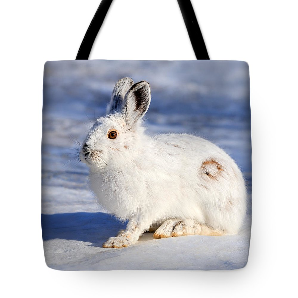 Snowshoe Hare Tote Bag featuring the photograph Whiter Than Snow by Tony Beck