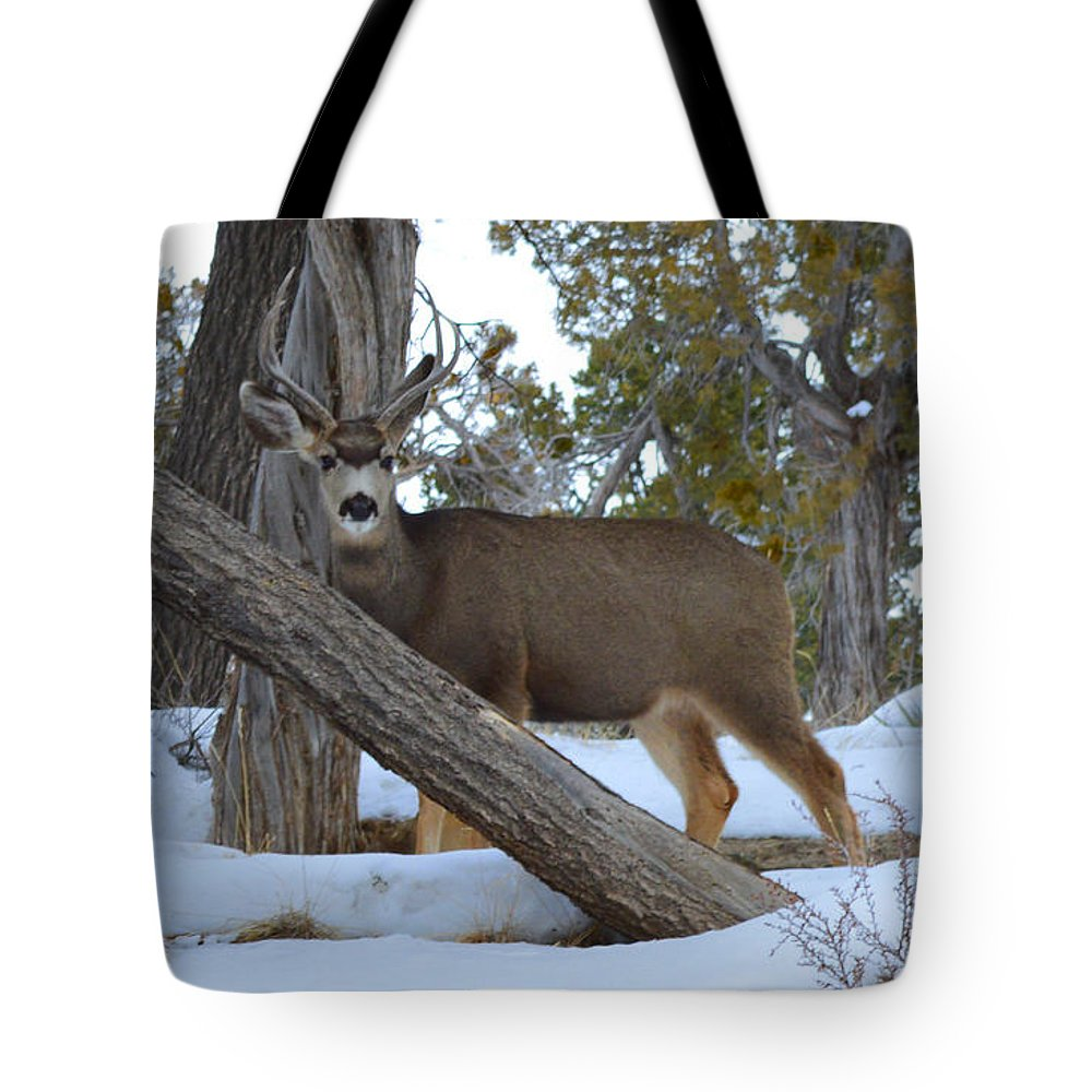 Deer Tote Bag featuring the photograph Who Me? Oh Deer by Meandering Photography