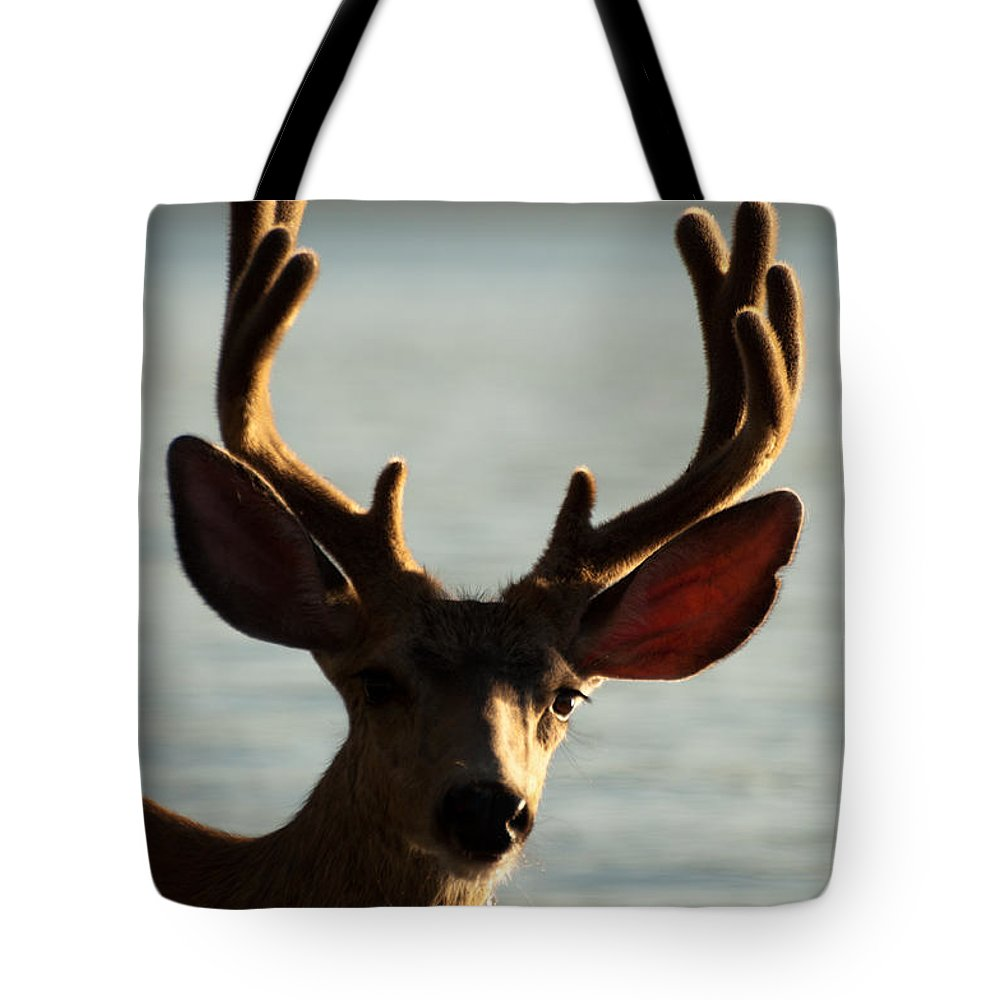 Deer Tote Bag featuring the photograph Who Ya Looking At by Bruce Gourley
