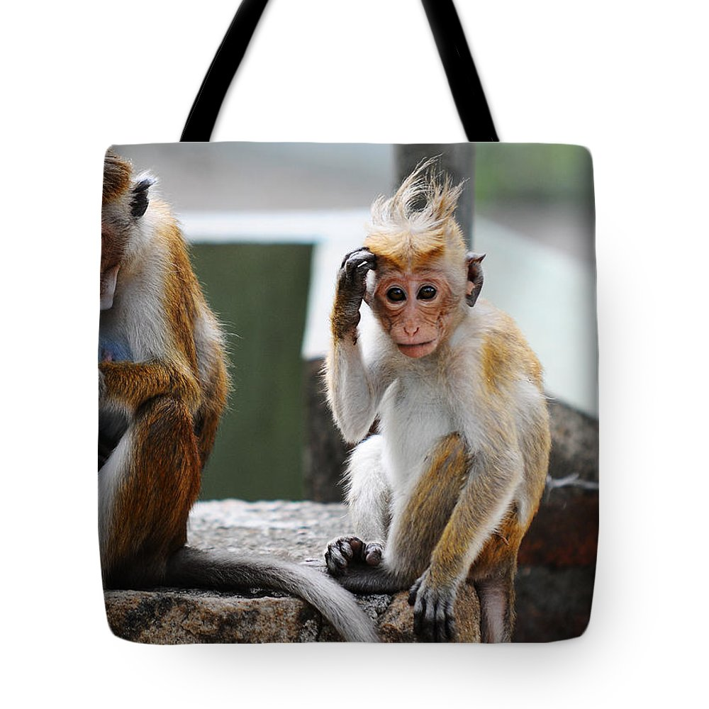 Monkey.monkeys Tote Bag featuring the photograph Why They Are Calling Me Socrates ? I Have To Think About by Jenny Rainbow