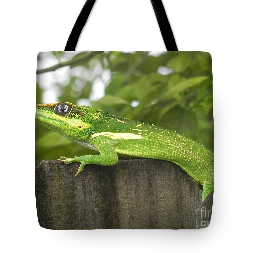 Photograph Tote Bag featuring the photograph Wild About You by Chrisann Ellis