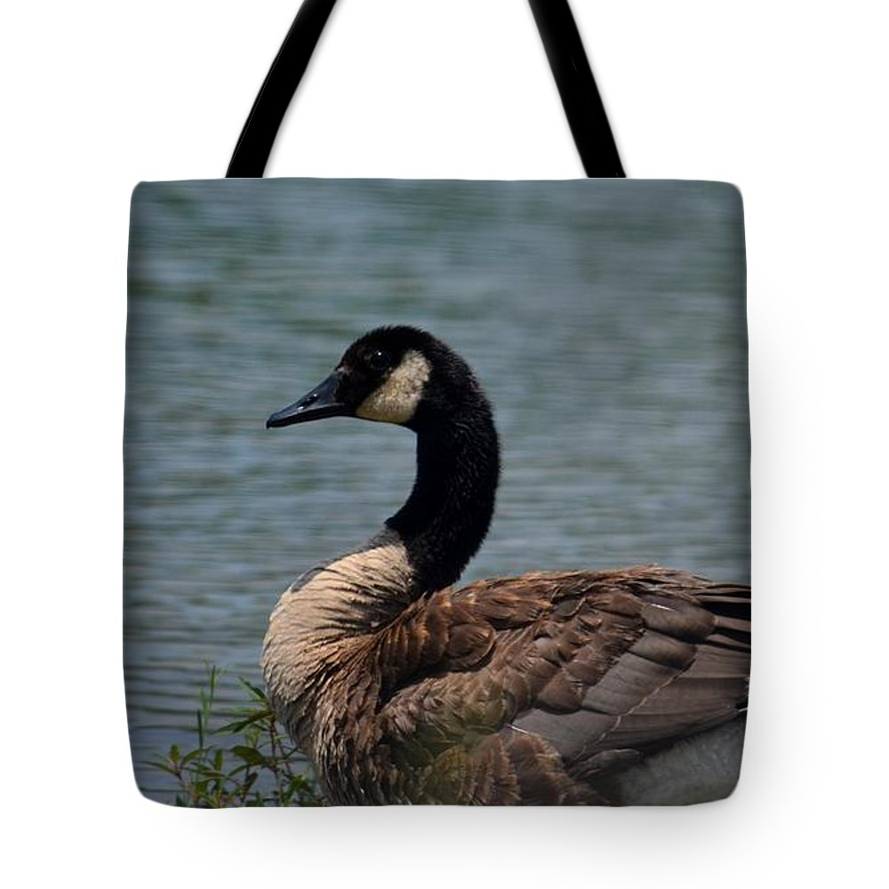 Wild Beauty - Canadian Goose Tote Bag featuring the photograph Wild Beauty - Canadian Goose by Maria Urso