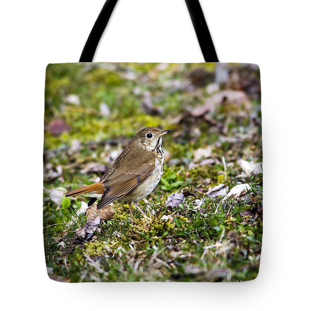 Bird Tote Bag featuring the photograph Wild Birds Hermit Thrush by Christina Rollo