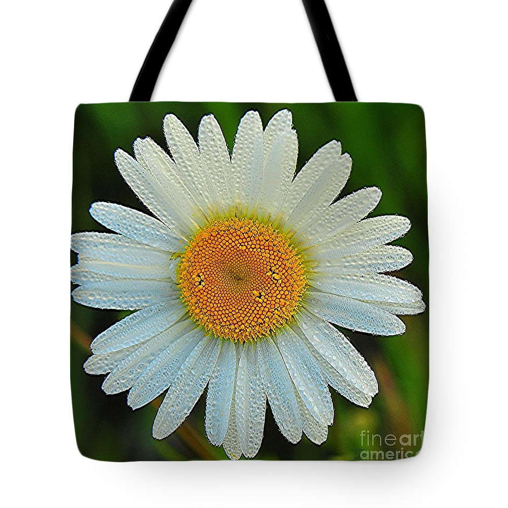 Daisy Tote Bag featuring the photograph Wild Daisy With Dew by Terri Gostola