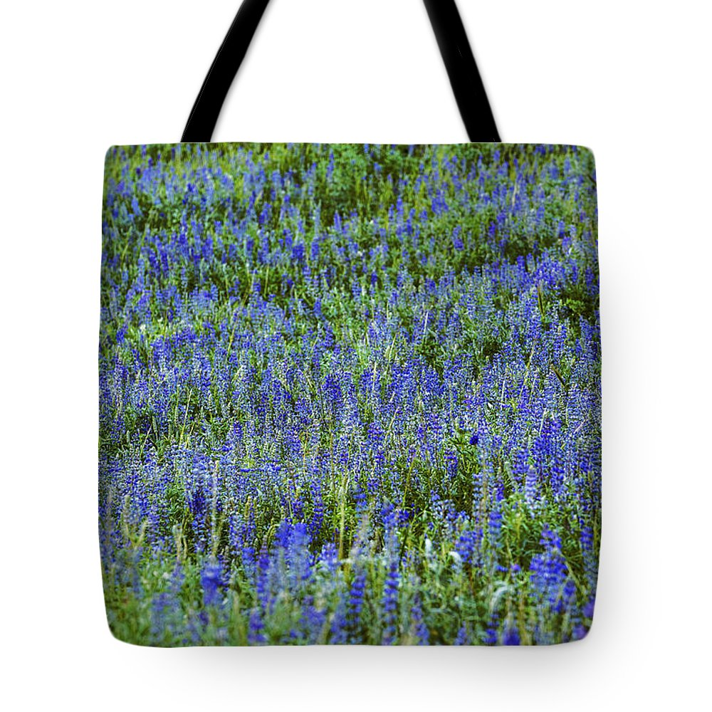 Lupine Tote Bag featuring the photograph Wild Flowers Blanket by Vishwanath Bhat