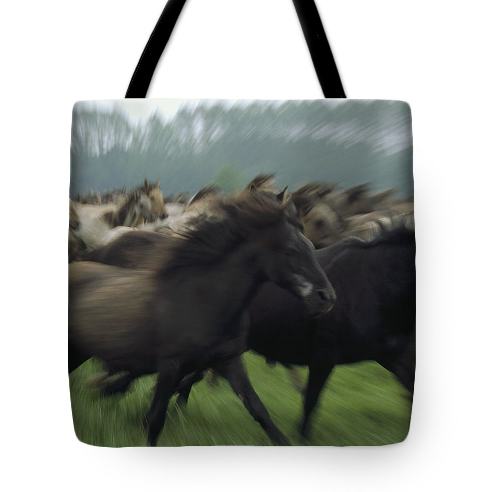 Blurred Motion Tote Bag featuring the photograph Wild Horse Equus Caballus Herd by Konrad Wothe