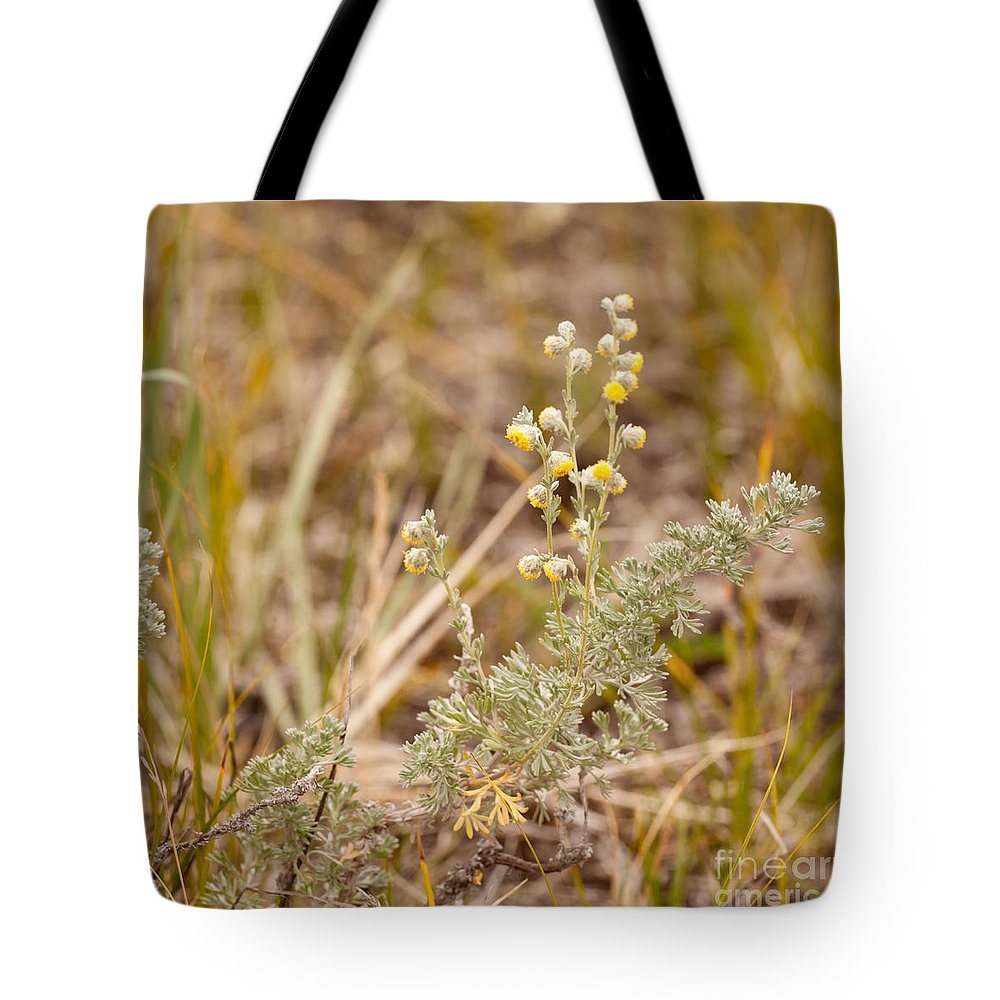 Aromatic Tote Bag featuring the photograph Wild Sage Wormwood Artemisia Figida Yellow Flower by Stephan Pietzko