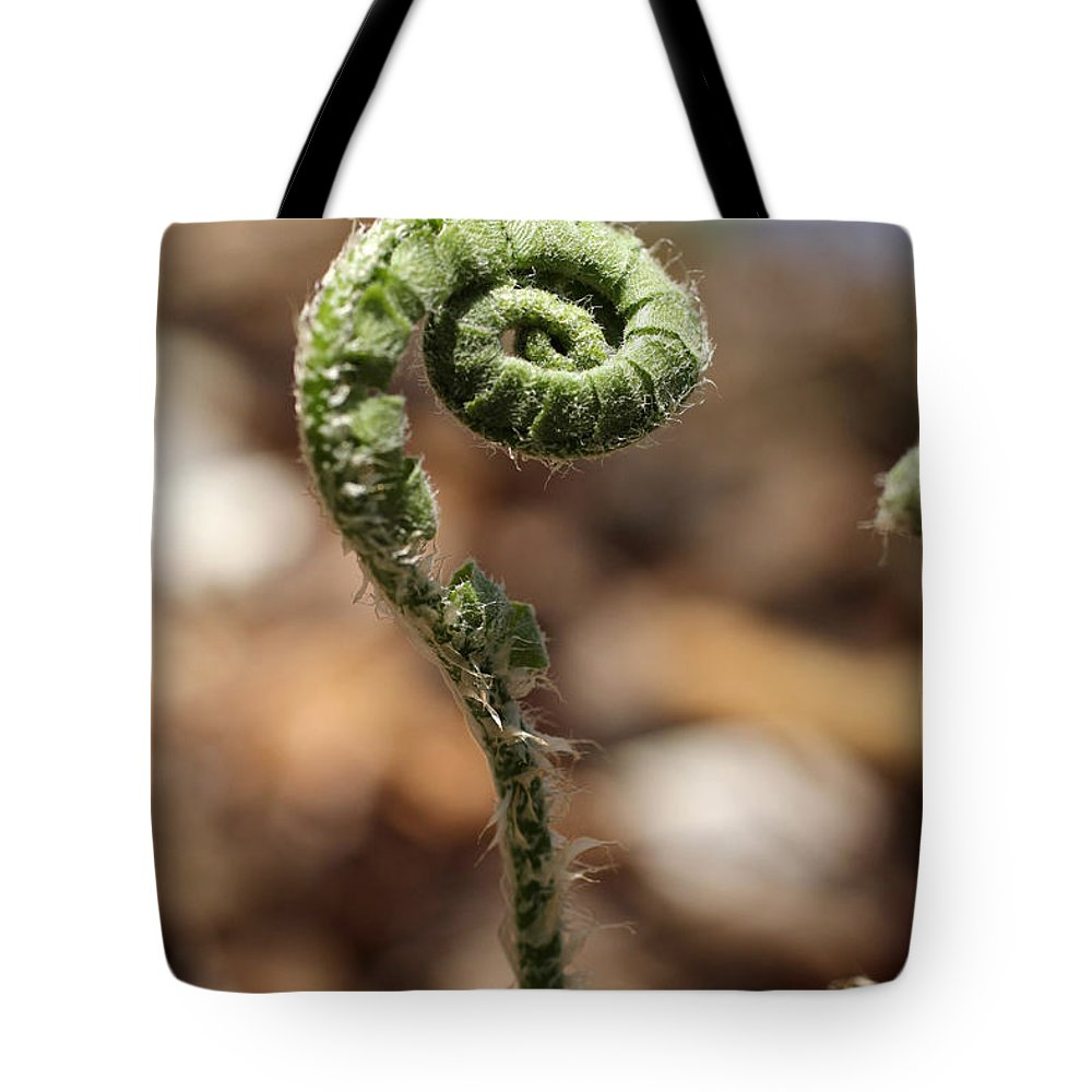 Fern Tote Bag featuring the photograph Wild Spring Fern by Adam Long